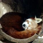Firefox 5, arrive bientôt